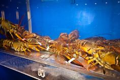 Lobster tank at Imperial Garden Seafood Restaurant in Seattle Southside