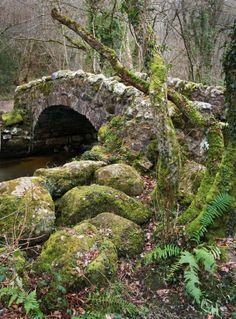Devon, England  photo via aryanna