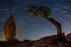 Monolith Rock and the Ancient Juniper Taken on October 11, 2015 Joshua Tree National Park, California Canon 70D Photo by Eric Gail https://flic.kr/p/An8nsj