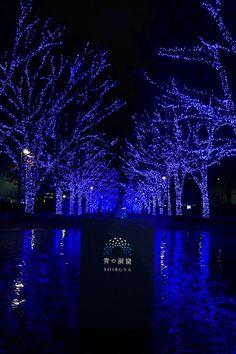 [画像] 青色LEDで渋谷を彩るイルミネーション「青の洞窟 SHIBUYA」点灯式に森星さん、山本昌さんが登場 11月22日~2017年1月9日の期間。渋谷公園通り~代々木公園ケヤキ並木で実施(19/19) - トラベル Watch