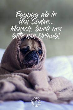 Zitat Hunde Urlaub In 2020 Witzige Spruche Hunde Zitate