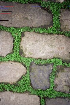Using weed barriers under flagstone allows homeowners to grow desirable ground cover. Using weed barriers under flagstone allows homeowners to grow desirable ground cover. Stepping Stone Molds, Garden Stepping Stones, Paving Stones, Growing Moss, Growing Plants, Patio Plus, Small Patio, Curved Patio, Small Yards