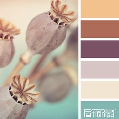 Peaceful Pods #Color #Palette