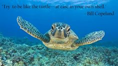 """Try to be like the turtle…"" – Bill Copeland"