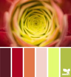 nature hues - @Design Seeds