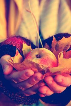 This seriously makes me want to write a canon oneshot where Peeta brings Katniss one precious apple, wrapped in leaves…