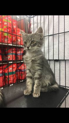 LOST CAT: 09/23/2017 - Pittsburg, California, CA, United States. Ref#: L37198 - #CritterAlert #LostPet #LostCat #MissingCat