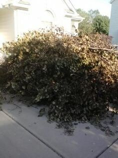 We made this pile of tree limbs disappear for a customer.  It's one of the many things we can do for you.