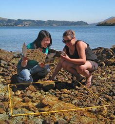 students are being encouraged to participate in Marine Metre Squared, a citizen science project being run by the NZ Marine Studies Centre, Otago University. Programme runs throughout Latest Science News, Citizen Science, Marine Environment, Teacher Education, Environmental Education, Tide Pools, Walking In Nature, Science Projects, New Zealand