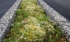 Richez Associés : un paysage pour le Grand Stade du Havre Landscape And Urbanism, Landscape Elements, Urban Landscape, Landscape Design, Plant Design, Garden Design, Sponge City, Water Management, Rain Garden