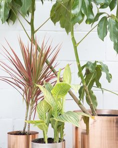 Crafted from a single piece of pure copper, the minimally elegant Copper Spun Planter is perfect for the tabletop. At 8 inches in diameter, the planter holds a range of standard plant sizes. Copper Planters, Planter Pots, Potted Plants, Indoor Plants, Thing 1, Self Watering, Modern Bohemian, Boho, Pure Copper