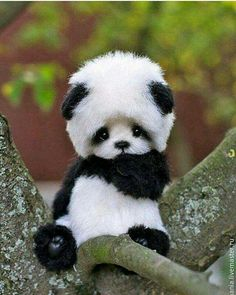 Adorable black and white panda