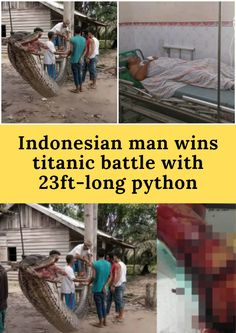 Indonesian man wins titanic battle with python Talking Dirty To Him Text, Laughing Therapy, Rules Quotes, Amazing Things, Amazing Facts, Romantic Moments, Weird World, Beautiful Family, Funny Pins