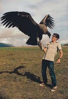 The California Condor (Gymnogyps californianus) is a New World vulture, the largest North American land bird. I WOULD DIE Pretty Birds, Beautiful Birds, Animals Beautiful, All Birds, Birds Of Prey, Scary Birds, Photo Aigle, Cutest Animals