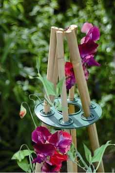 Wigwam Grips Order the Wigwam Grips to make teepee with free transport on-line from The Backyard Gates. Purchase the Wigwam Grips to make teepee on-line. Pea Trellis, Bamboo Trellis, Garden Trellis, Garden Gates, Sun Garden, Potager Garden, Garden Landscaping, Landscaping Borders, Herbs Garden