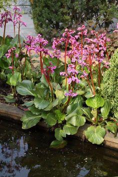 Terrace Garden, Garden Planters, Water Garden, Herb Garden In Kitchen, Summer Plants, Tall Plants, Winter Flowers, Garden Borders, Farm Gardens