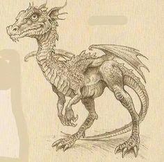 Art from the Dragonology series? Fantasy Dragon, Dragon Art, Fantasy Creatures, Mythical Creatures, Chromatic Dragon, Dragons, Fanart, Dragon Pictures, White Dragon
