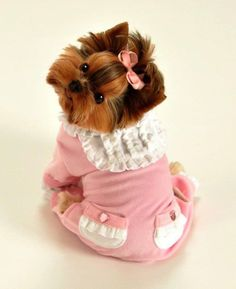 Yorkie - Rockstar Puppy offers an extensive selection of designer dog clothes like this pink velvet dog jumper. Shop online for cute dog clothes. Yorkshire Terriers, Yorkies, Cute Baby Animals, Funny Animals, Cute Puppies, Cute Dogs, Teacup Puppies, Dog Jumpers, Training Your Dog