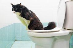 Afinal não é só coisa de filme, é possível mesmo! Veja só como deve fazer para ensinar seu gato :) #gato #animais #cats