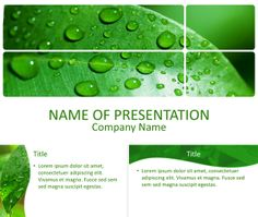 Beautiful PowerPoint template with a picture of a green leaf with water drops close-up. Use this theme for presentations on nature, environment, botany, spring, etc. Water Drops, Botany, Green Leaves, Lorem Ipsum, Presentation, Templates, Nature, Environment, Backgrounds