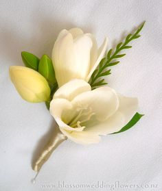 White Boutonniere #2 freesia-fern-butonhole Gent's Buttonhole using cream freesia, with fern and bud detail. Bound in gold satin.