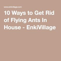 how to get rid of little moths in your house