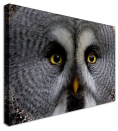 Owl Gaze by Abstract Art Canvas Printers, Canvas Art Cheap Prints by www.canvastown.co.uk