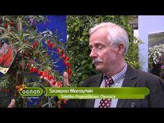 Zbieranie plonów z przydomowych ogrodów, powojniki, egzotyczne pnącza - Ogród Bez Tajemnic - YouTube