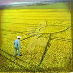 Crop Circle by Dongedy