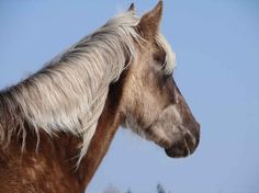 https://upload.wikimedia.org/wikipedia/commons/1/17/Rock-mountain-horse-head.jpg