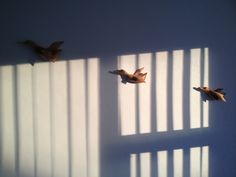 Duck alert Curtains, Furniture, Beautiful, Home Decor, Blinds, Decoration Home, Room Decor, Home Furnishings, Draping