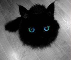 Kolor magii? The Color of Magic: feeed meeee slaveeee #cat #thecolorofmagic #catsareassholes