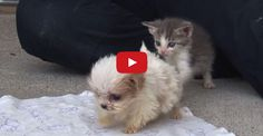 Cutest Rescue Kitten and Puppy Are Best Friends