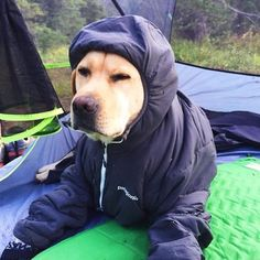 """Camping With Dogs"" Instagram Will Inspire You To Go Hiking With Your Dog 
