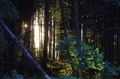 Woodland IMGP4864a by Biberius on DeviantArt