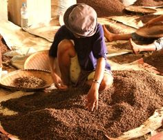 Madagascar, Spices, Tamatave | Tagged cloves, madagascar, photography, spices, tamatave