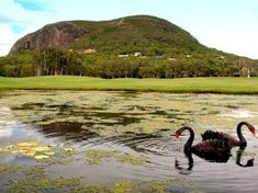 Image result for sunny coast mt coolum