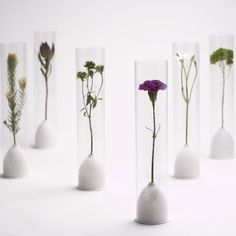 A product that acts as both packaging and a display system for fresh flowers.