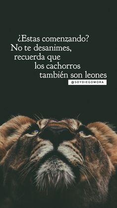 @soyDiegoMora Inspiración diaria #CumpleTuProposito #NuncaTeRindas #SomosValientes