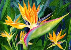 Flower Paintings Art Print featuring the painting Bird-of-paradise by Janis Grau