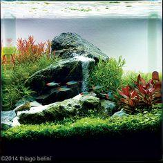 "2014 AGA Aquascaping Contest -  27L (7 gallons) Aquatic Garden: ""A minimal waterfall"""