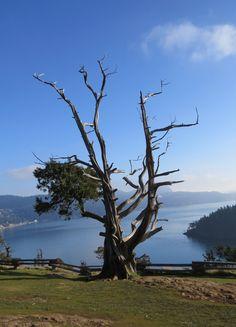 Viewpoint, Washington state park