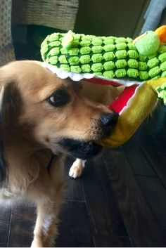 I will NOT let this alligator ruin my holiday! #laborday #holiday #dog #cute