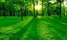 Charming gathering of lovely garden trees an abundant nature greenery HD picture of worth millions. Top one in beautiful nature HD pictures. Green Nature Wallpaper, Beautiful Nature Wallpaper, Forest Wallpaper, Wallpaper Desktop, Laptop Wallpaper, Desktop Backgrounds, Sunrise Wallpaper, Wallpaper Maker, Spring Wallpaper