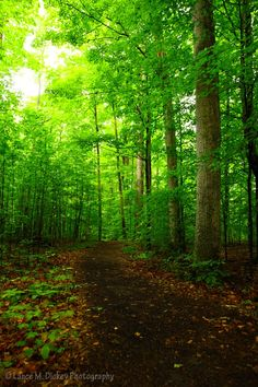 Sacred grove. Where the Father and the Son appeared to Joseph Smith in 1820.