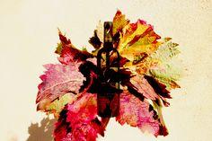 #Ecriture #Wine #Redwine #vin #masdelecriture