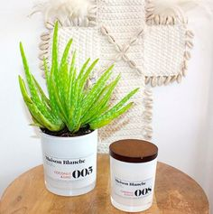 CLO Studios in Noosa love to up-cycle! So they made their empty candle into a great new succulent home.