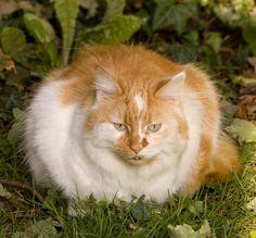 Fat Cats [Slideshow]