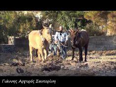 ▶ Ζευγάρισμα Όργωμα Αμπελιού με παραδοσιακό τρόπο - YouTube Seeds, Bread, Horses, Youtube, Animals, Animaux, Breads, Horse, Animal