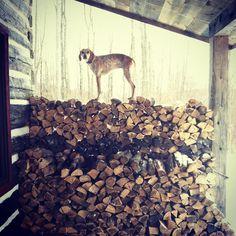 Maddie on logs